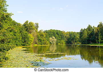 pond in the forest. background, nature.