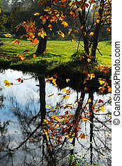 Pond in the forest witch reflection
