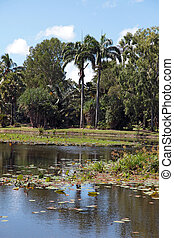 Pond in tropical climate.