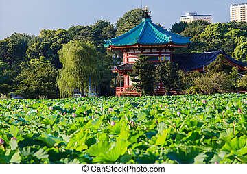 Pond in Ueno park, Tokyo Japan