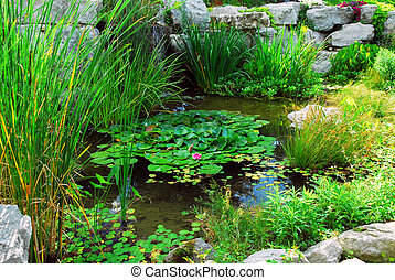 Pond landsaping - Natural stone pond lanscaping with aquatic...