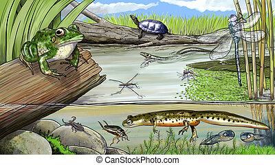 Pond life - Digital illustration of life in a pond