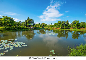 pond lotus water lily / landscape of lake with pavilion riverside on bright day blue sky