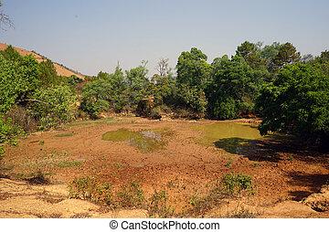 Pond near the trees