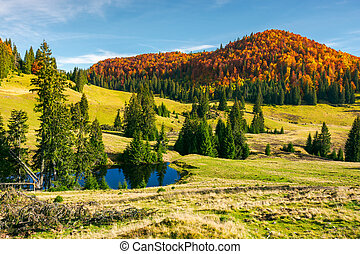 pond on a grassy meadow among spruce trees. beautiful autumn...