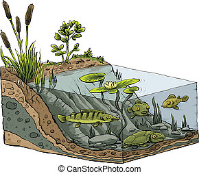 Cartoon cross-section of the shoreline of a pond.