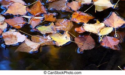 Pond With Fallen Leaves