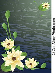 pond with fine blossoming lilies