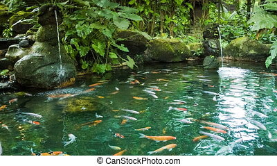 Pond with fish and waterfalls