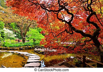 Pond with overhanging red Japanese maples during springtime...