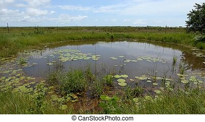 pond with the aquatic plants in Senegal