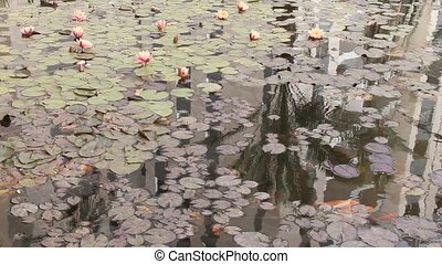 Pond with water plants and goldfish