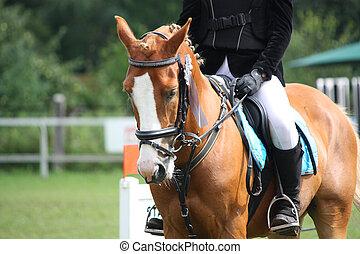 poney, équestre, concurrence, palomino, pendant, portrait