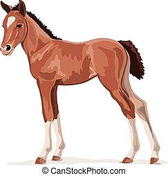 poney brun, cheval, poulain