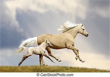 poney, jument, et, poulain