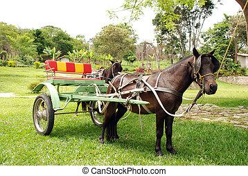 poney, piccolo, cavallo