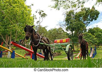 Poney, small horse