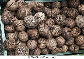 Pong pong seed. Cerbera odollam fruit. Othalanga - Suicide tree.