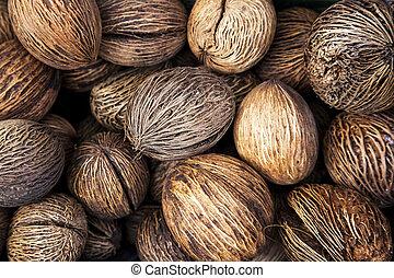Pong Pong tree seeds natural texture