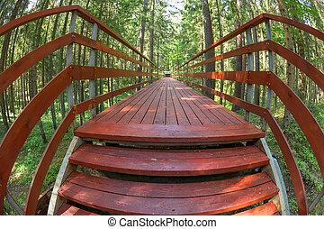 pont, été, bois, sur, forêt, ravin, jour