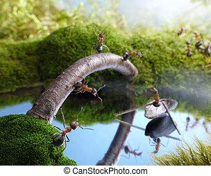 pont, batelier, scrounger, contes, fourmi, nouveau
