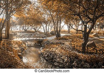 pont bois, dans, jardin fleur, sur, soleil matin, lumière, sépia, couleur