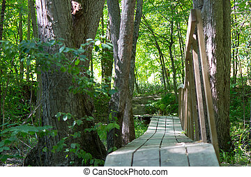 pont bois, forêt, allant pied piste