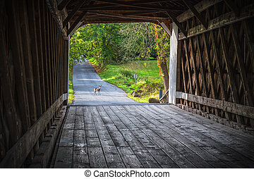 pont couvert, cerf