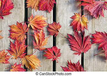 pont, feuilles, arbre, japonaise, bois, érable