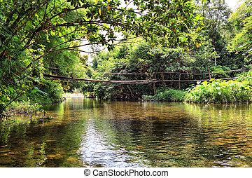 pont, jungle, rivière, thaïlande