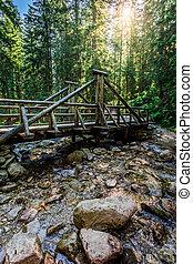 pont, mener, sur, ensoleillé, piste, forêt, jour