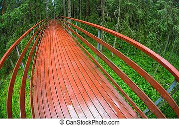 pont, pluvieux, été, bois, sur, forêt, ravin, jour