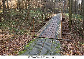 pont, sur, automne, piéton, forêt, ravin