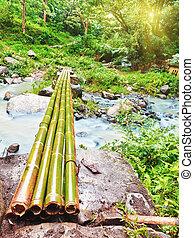 ponte, bambù