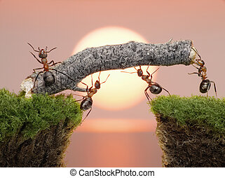 ponte, costruire, sopra, formiche, acqua, squadra, alba