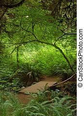 ponte, floresta