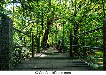 ponte, nacional, madeira, parque