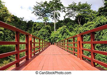 ponte, nacional, madeira, tailandia, parque