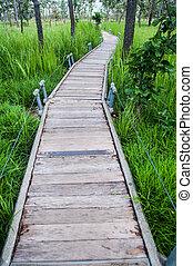 ponte,  ngam, madeira, nacional, parque, passeio,  pa,  chaiya,  hin