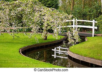 ponte, pittoresco, ruscello, sopra, fioritura, parco, esso, albero