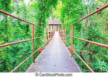 ponte sospeso, passerella, con, albero, in, il, foresta, parco pubblico