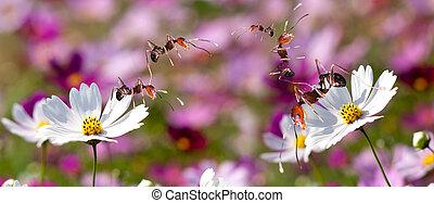 ponte, trabalho, construir, formigas, equipe