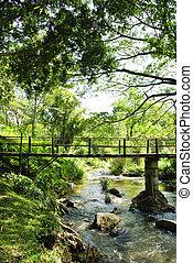 ponts, bambou, exotique, forêts tropicales