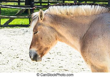 pony, a, paddock.