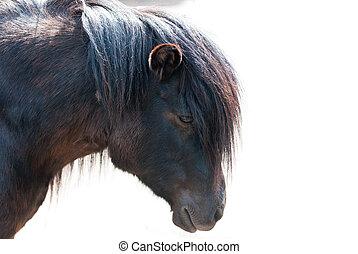 pony, closeup