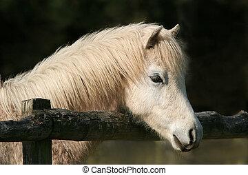 pony, friedlich