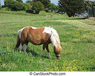 Pony in a meadow
