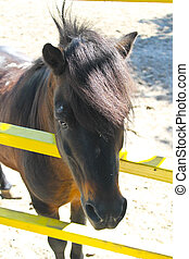 Pony in a paddock