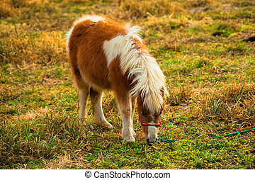 Pony in the grass field