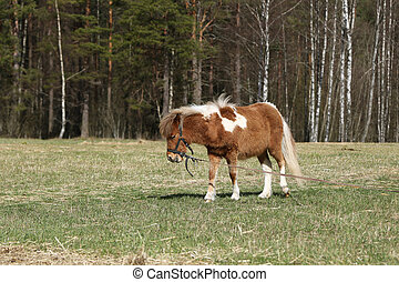 Pony in the pasture